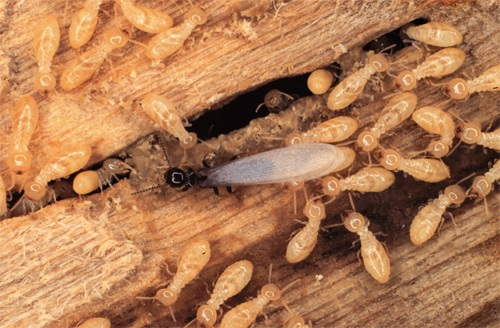 Handy Tips To Keep Your Home Safe From Termites!