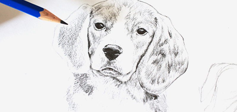 How To Sketch Animals?