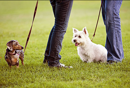 5 Ways Pets Can Improve Your Health